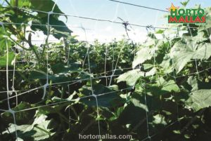 Mesh espalier installed in field of crops